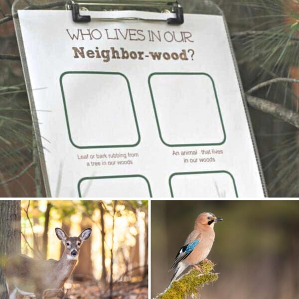FREE printable woodland and forest simple scavenger hunt for toddlers and preschoolers