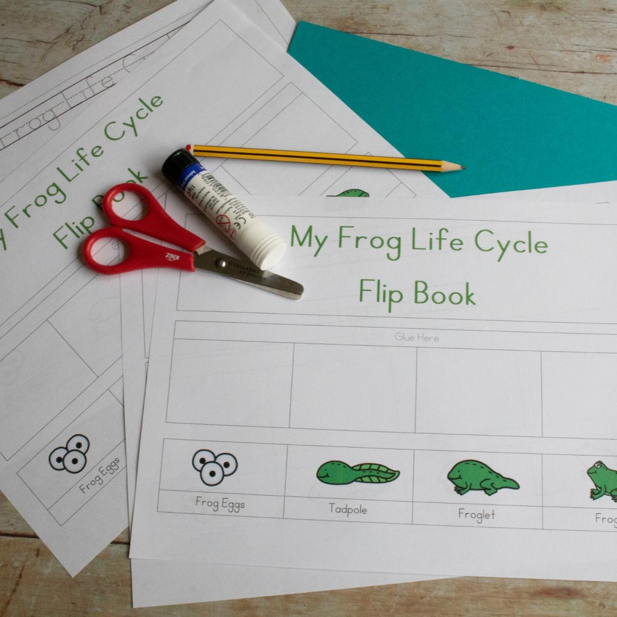 Free Printable Preschool Frog Life Cycle Flip Book